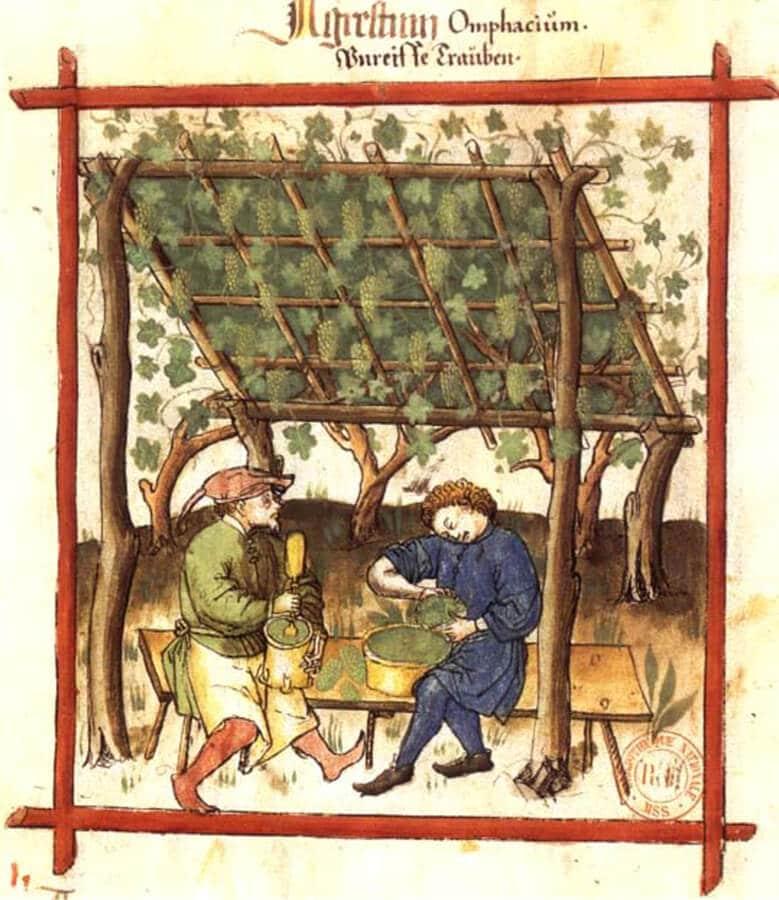 vino blanco edad media manuscrito taquinum sanitatis