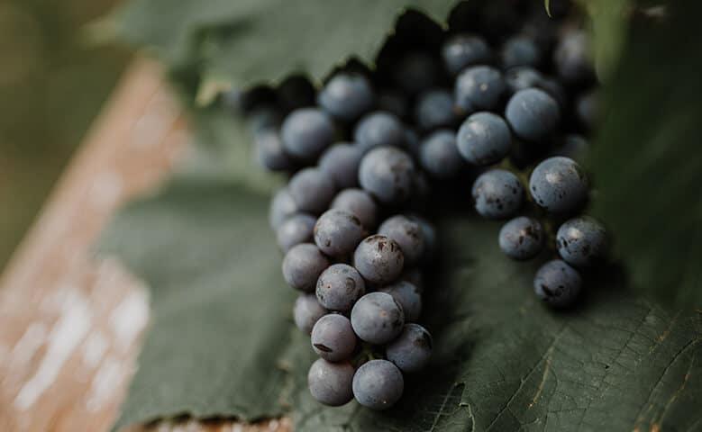vino tinto uvas 1